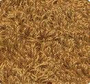 840 Brun doré / Gold